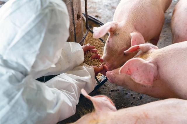 """亞 삼켜버린 돼지열병...세계 단백질시장 패턴 바뀐다"""""""