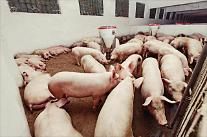 世界中で豚肉騒動の兆し・・・米中貿易葛藤を静めた豚コレラ?