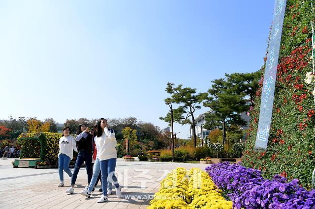 논산시민공원 가득 메운 국화꽃 향기