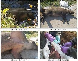 .韩国民官军联合捕猎野猪严防猪瘟扩散.
