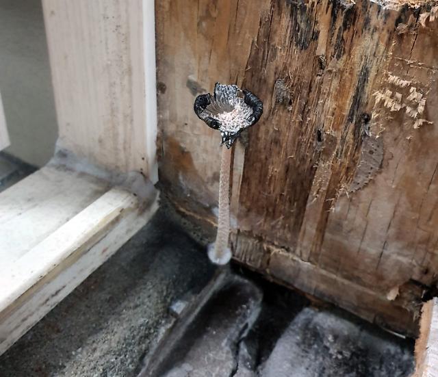 [포토] 경남 진주 신축 아파트 욕실에 핀 버섯
