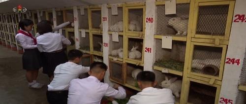 북한 식량난 얼마나 심각하길래…北매체 토끼 사육 중요성 강조