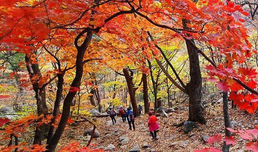 [슬라이드 화보] 붉게 물든 설악산 단풍...가을 만끽하는 등산객들