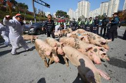 """.韩农户放猪""""围攻""""政府大楼."""