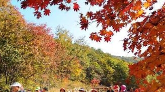 Lượng khách du lịch Hàn Quốc sang Việt Nam tăng, số lượng tiền trao đổi sang tiền Việt tăng 40%
