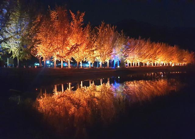 [포토] 황홀한 야경, 괴산 은행나무길