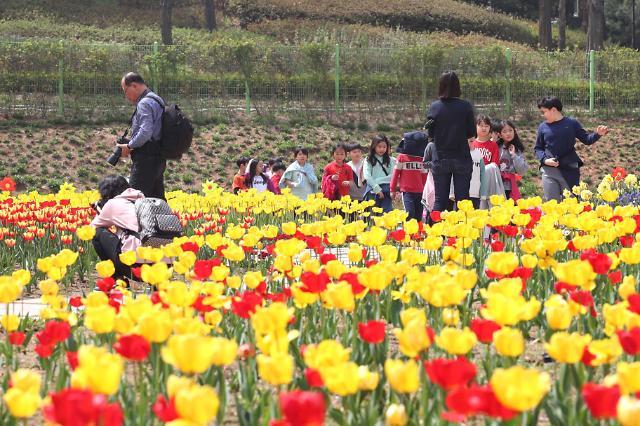 인천 동구, 송현공원 튤립축제 대비 봄꽃 8만본 식재