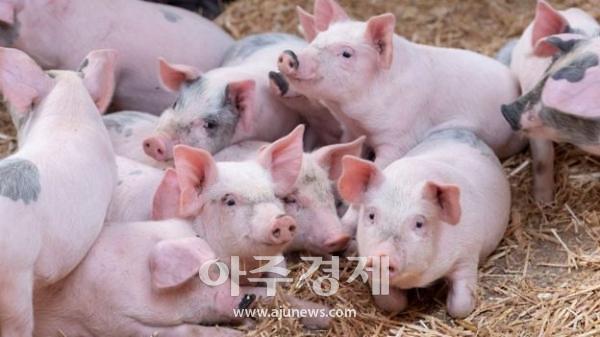 """경기도시장상권진흥원, """"팀장님 !! 오늘 삼겹살 회식해요"""""""