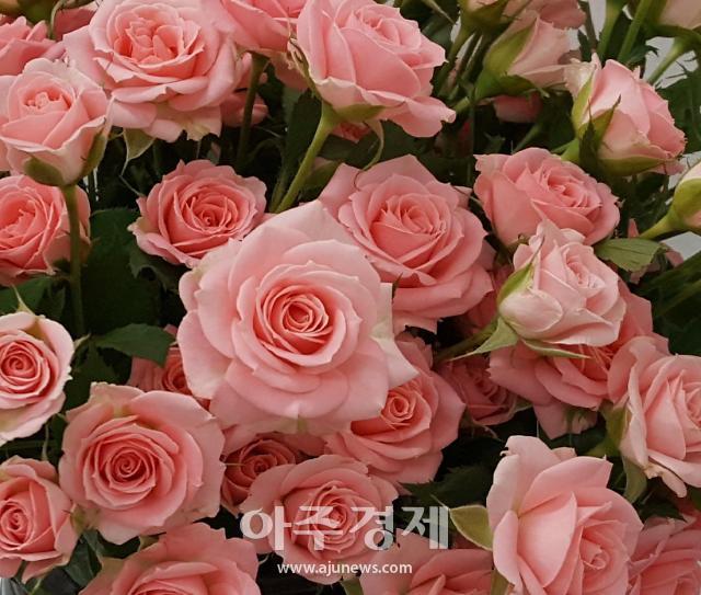 경남 장미 '햇살', 대한민국우수품종 시상식서 농수산부장관상
