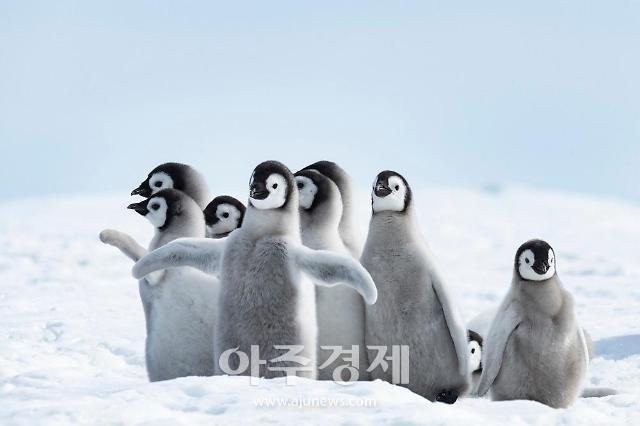 펭수의 향기 느끼러 남극 여행 갈래…남극행 검색량 3배 이상 증가