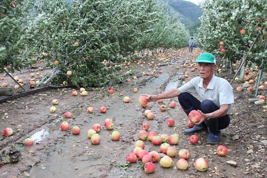 작년 농작물 재해보험금 9089억원 지급...이상기온·태풍에 역대 최대