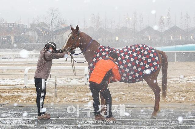 코트 입은 경주마…렛츠런파크 부산경남 경주마 겨울나기 화제