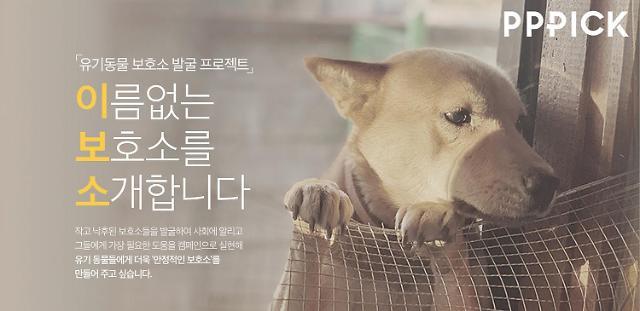 유기동물 보호소 발굴 더에스엠씨그룹  사회공헌 캠페인 지원