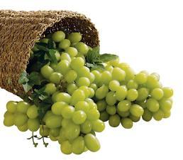 .新南方政策渐显成效 韩国产水果东南亚地区大受欢迎.
