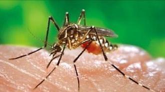 Sau Covid19, Hàn Quốc cảnh báo 'Virus Zika'…3 người bị nhiễm cùng một lúc