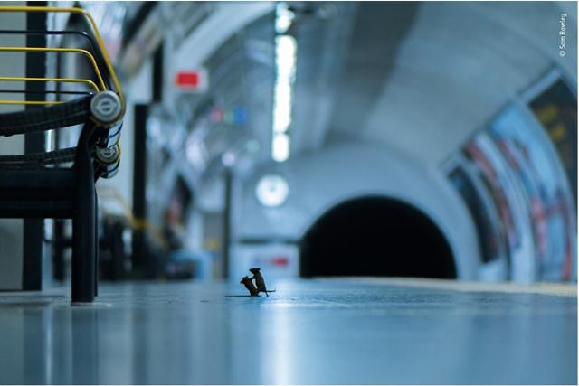 [광화문갤러리] 시민들이 선정한 25장의 야생동물 사진