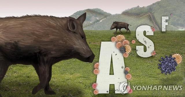 연천 야생멧돼지 폐사체 아프리카돼지열병 바이러스 1건 또 검출…총 229건