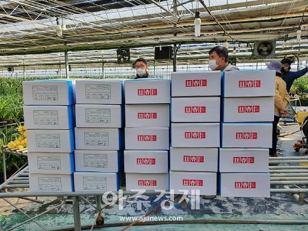 충남도, 한국형 절화 프리지어 일본시장 개척한다
