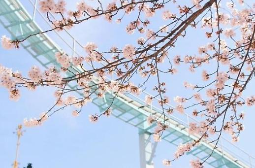 Hủy bỏ lễ hội Hoa anh đào hồ Seokchon do lo ngại lây lan Covid19