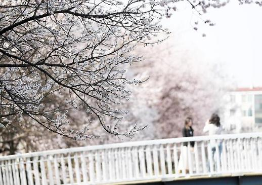 [AJU VIDEO] 疫情期间,论不出门如何赏到樱花~