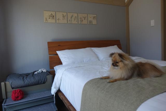 반려견과 숙박이 가능한 남이섬 호텔정관루 투투별장 모습[사진=남이섬 제공]