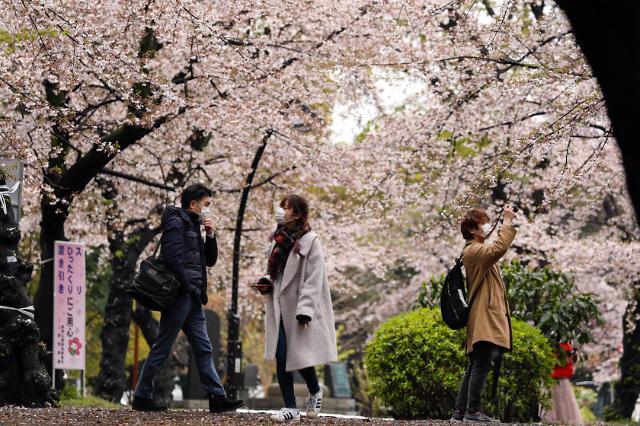 [포토] 코로나19에도 도쿄 공원에서 벚꽃 구경하는 사람들