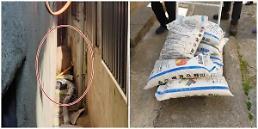 .200斤野猪钻墙缝里出不来吓坏居民 韩国警方出妙招.