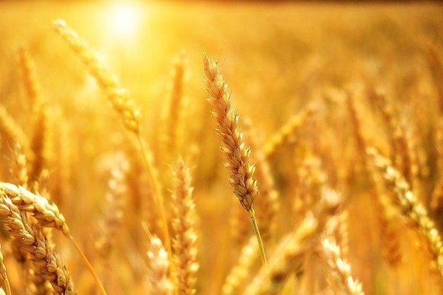 주요국 곡물수출 중단 식품업계 가격인상으로 불똥 튀나