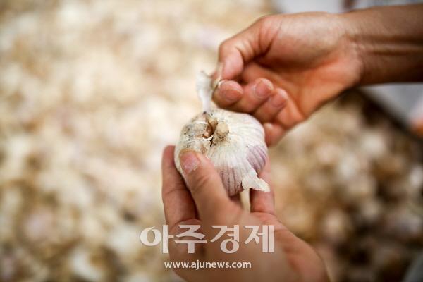 홍성군 마늘독립 홍산마늘, 대한민국 최고 마늘 선언