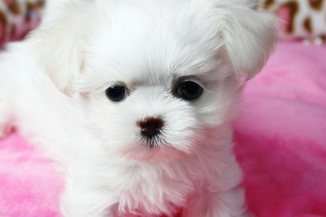 韩国一男子虐狗致死被罚3万元