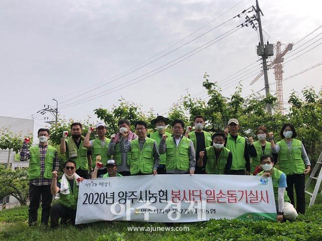 양주시 농협봉사단, 일손부족농가 농촌일손돕기