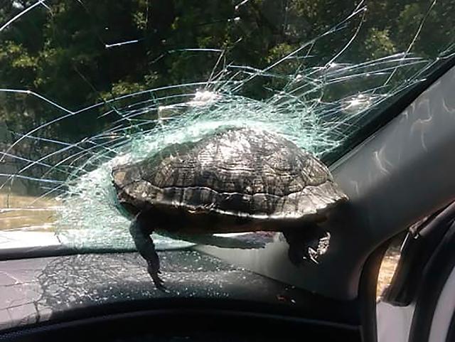 [포토] 고속 주행 중 거북이가 날아올 확률은?!