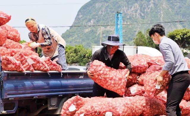 마늘 남아돌아...정부 수매 한달 가량 앞당겼다