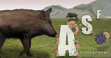 중국, 아프리카돼지열병 재확산 조짐... 올 들어 14건