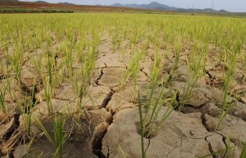 调查:朝鲜近半人口营养不良