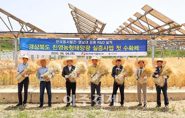 영남대 영농형태양광 단지 '전기도 만들고, 농작물도 생산하고'