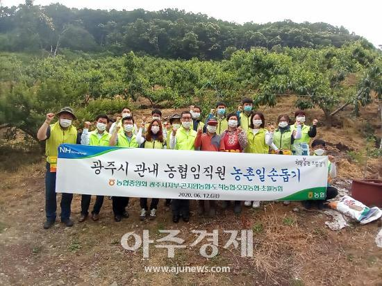 농협 광주시지부, 관내 농협 임직원 농촌일손돕기 펼쳐