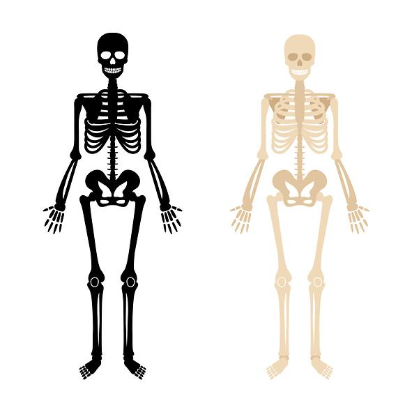 Brittle bone disease treatment found to be effective in suppressing COVID-19
