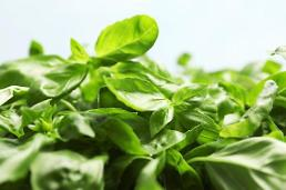 .Pesticide inspection of basil from Thailand ordered for importers.
