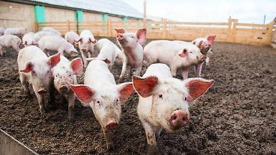 """""""중국 전문가, 5년 전 이미 돼지 독감 예고했었다"""""""