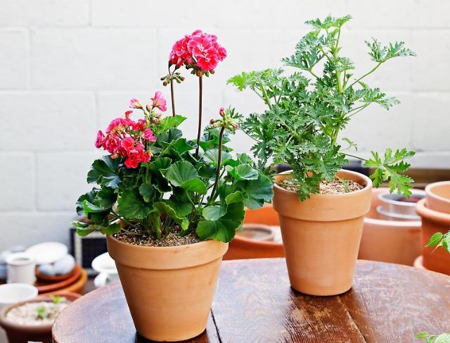 농식품부-aT, 계절 꽃 프로젝트, 올해의 여름 꽃과 식물 선정