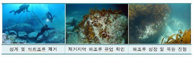 독도 바다사막화 막아라...둥근성게 생태계 개선 사업