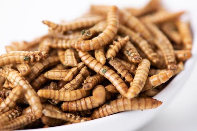 Meal beetle species larvae can be used for polystyrene decomposition
