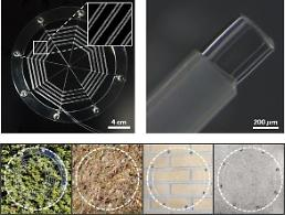 Researchers emulate spiders capturing strategy to fabricate ionic spiderweb