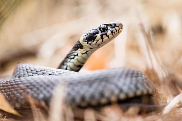 끝이 안보이는 장마···주의 사항은 침수 피해와 뱀?
