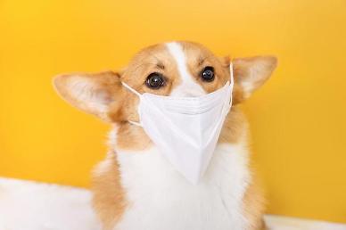 일본서 인간대 동물간 코로나19 전염 사례