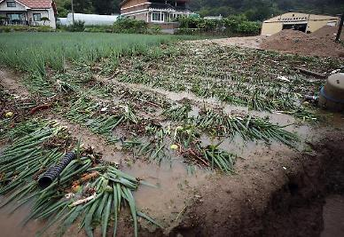 집중호우에 가축 30만마리 폐사·농작물 6000㏊ 침수