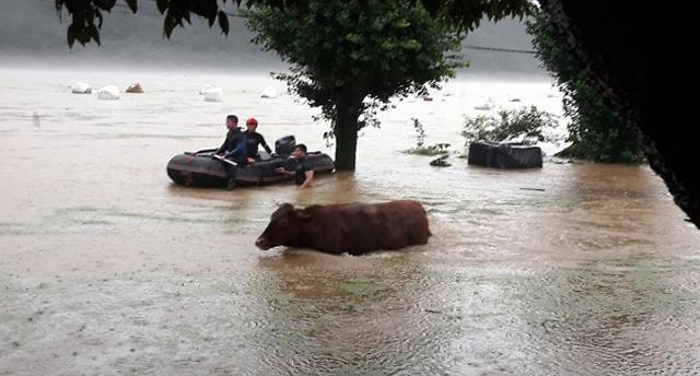 [포토] 집중호우에 물에 빠진 소