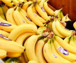S. Korean farmhouse celebrates first harvest of bananas thru full-scale cultivation