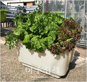 오산시, 찾아가는 도시농업 그린텃밭 사업 실시